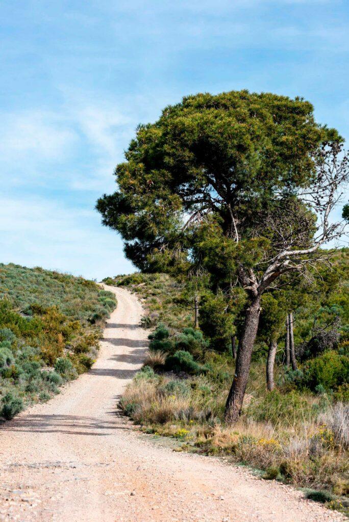 Senda dels Tossals - Turisme Llíria
